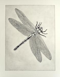 Original Dragonfly Etching, A/P. Print size 30 x 22.5cm.